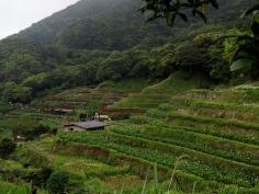 Calla lily fields. (Taiwan)