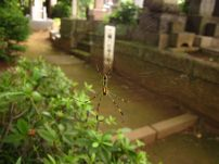 Japanese Spiders. Colorful!