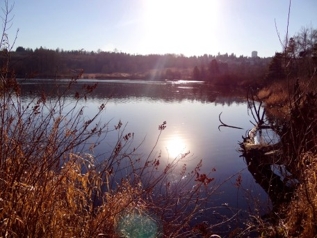 Deer Lake and Frost 3