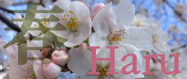 H is for Haru