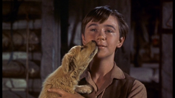 Old Yeller. The dog that loved, and loved until sickness forced his friend to betray (or honor, depending on how you look at it) that trust. Animals as characters tend to fall under this archetype, as they are bastions for 'unconditional love'.