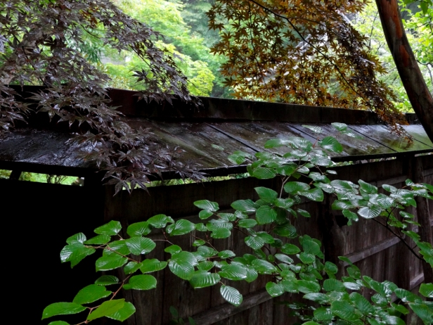 Three Colors; foliage at Hosen-in