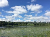Deer Lake Lily Pads