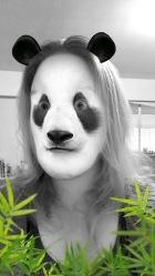 Surprised Panda